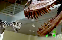 Resurrecting Dinosaurs: From Fossil to Museum Floor