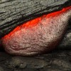 HONOLULU Magazine: Living on Lava